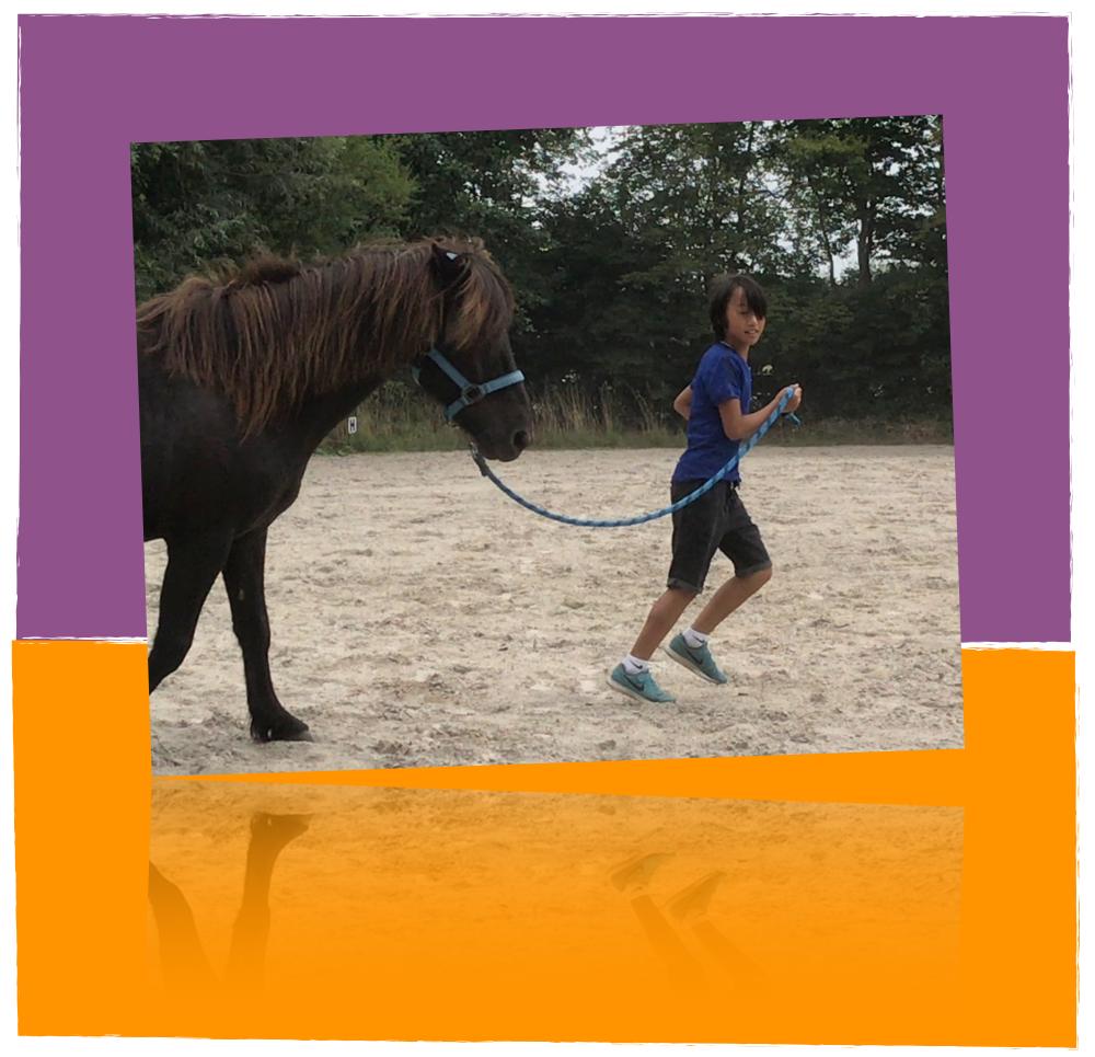 comedi coaching laat je kind weer stralen met paardencoaching