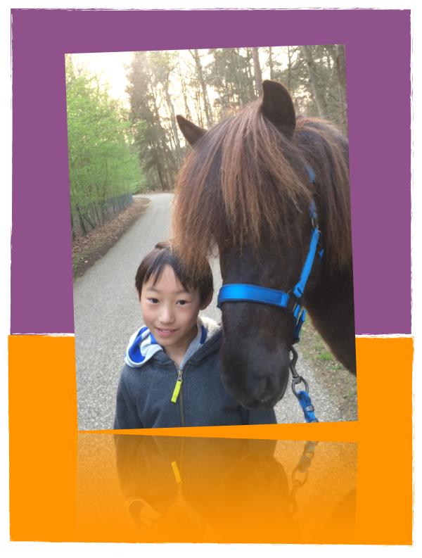 Comedi Coaching Laat je kind weer stralen door paardencoaching