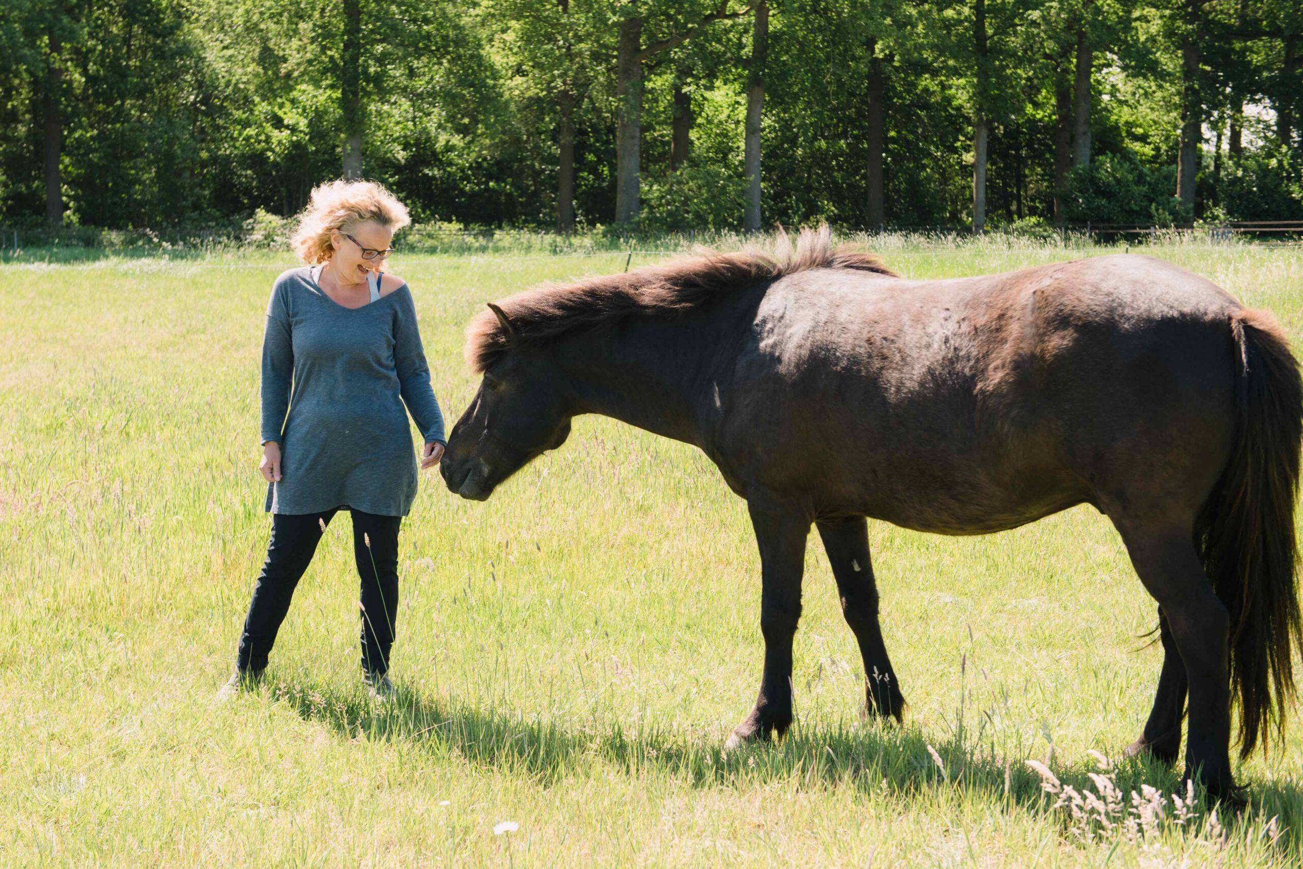 Coachen Met IJslandse Paarden Comedi Coaching