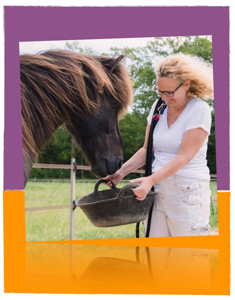 Comedi Coaching Tarieven Paardencoaching